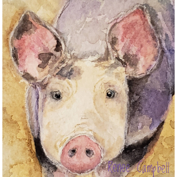 Close Up of Pig Watercolor, Inquisitive Piggy, ATC Size Small Painting