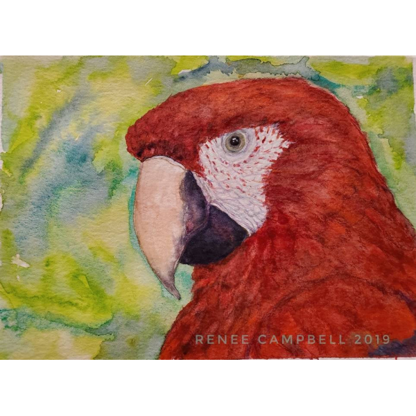 "Original ""Scarlet Macaw,"" Watercolor, Mixed Media Small Painting"