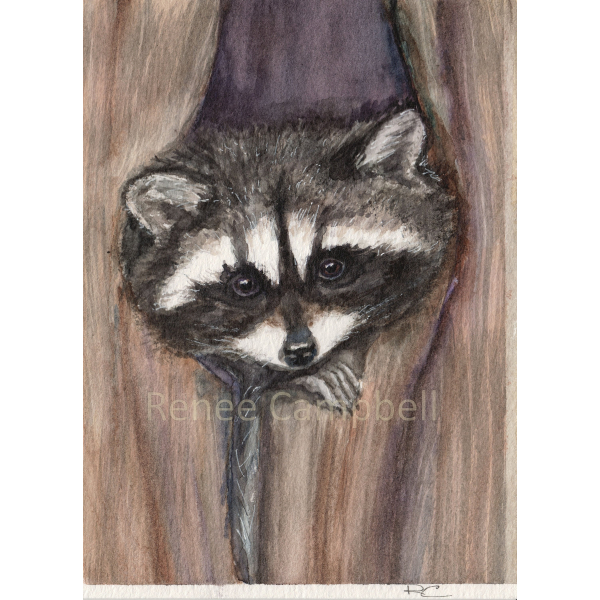 "Artwork Cozy Raccoon Art Print, 7"" x 5"""