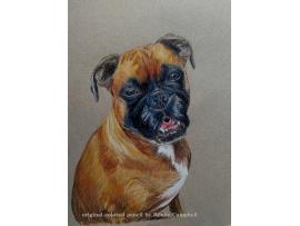 Custom Pet or Wildlife Portrait - Original Colored Pencil Painting - Unframed