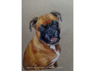 Custom Pet or Wildlife Portrait - Original Colored Pencil Painting