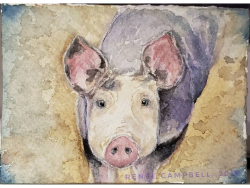 Original ACEO - Pig Watercolor, Inquisitive Piggy, Small Painting