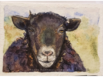 Original Miniature - Black Sheep Watercolor, ACEO Small Painting