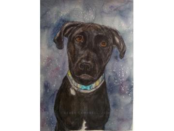 Watercolor Pet Portrait Commission
